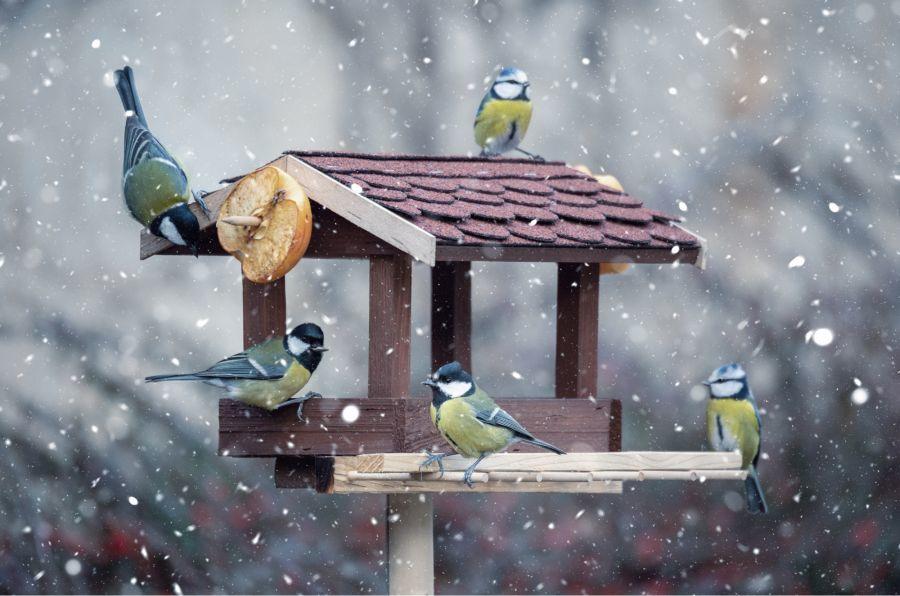 Kerti madarak etetése