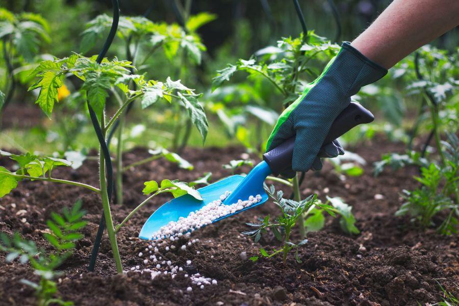 Műtrágyázás tavasszal a kertben