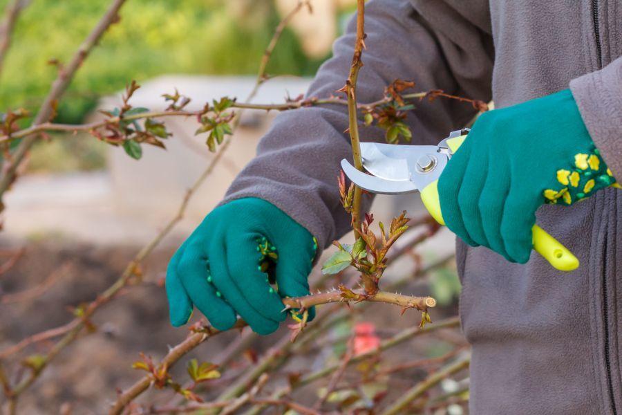 Metszés a tavaszi kertben