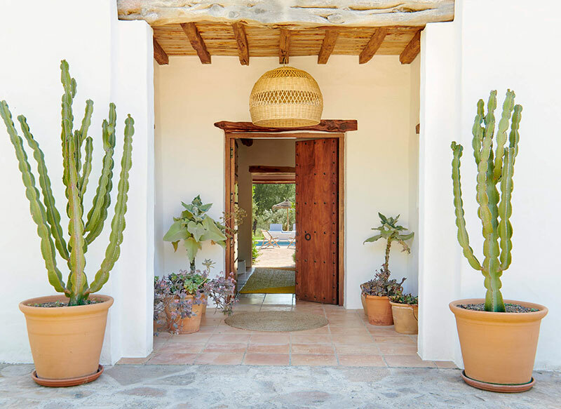 Kaktuszok a bejárat mellett